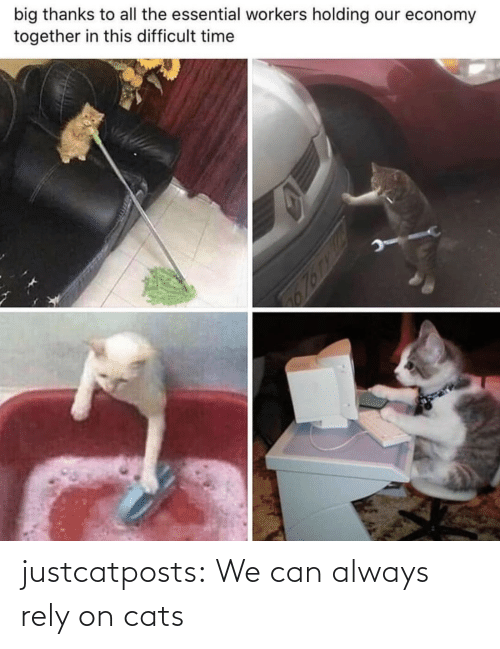 can: justcatposts:  We can always rely on cats