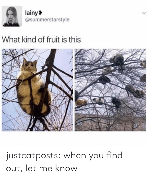 When You Find Out: justcatposts:  when you find out, let me know