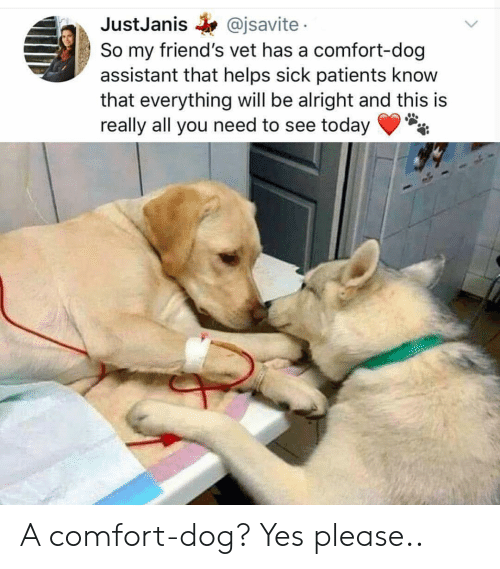 Friends, Today, and Sick: JustJanis @jsavite  So my friend's vet has a comfort-dog  assistant that helps sick patients know  that everything will be alright and this is  really all you need to see today A comfort-dog? Yes please..