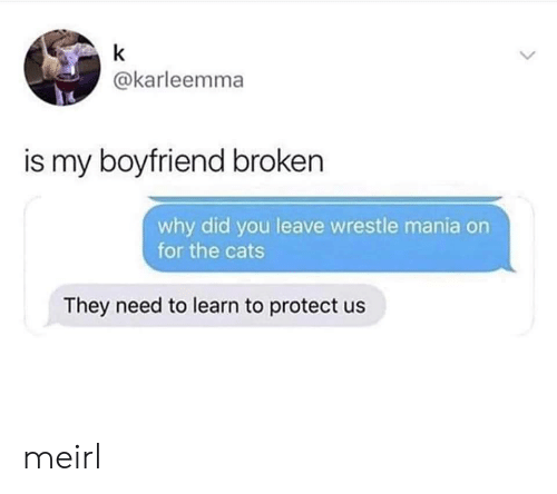 Cats, Boyfriend, and MeIRL: k  @karleemma  is my boyfriend broken  why did you leave wrestle mania on  for the cats  They need to learn to protect us meirl