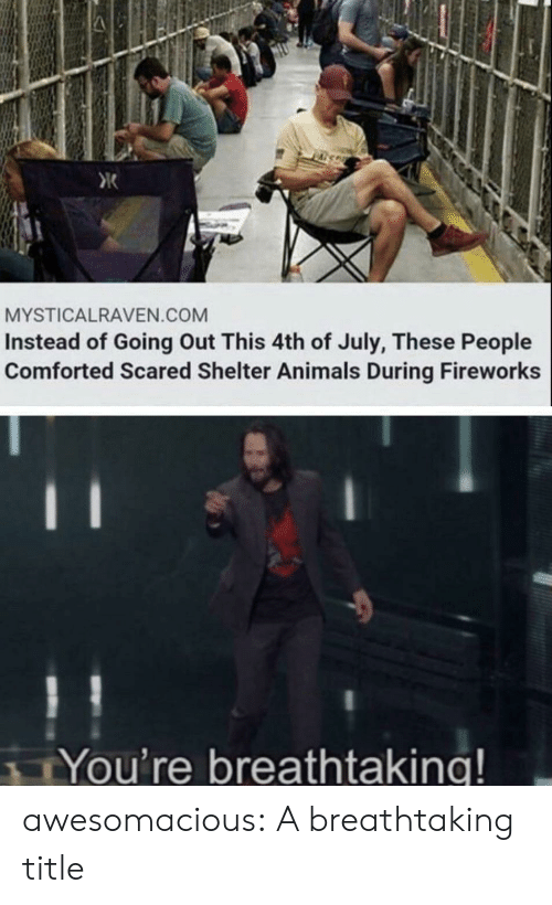 Animals, Tumblr, and 4th of July: K  MYSTICALRAVEN.COM  Instead of Going Out This 4th of July, These People  Comforted Scared Shelter Animals During Fireworks  11  You're breathtaking! awesomacious:  A breathtaking title