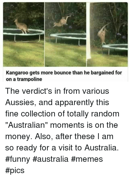 """Apparently, Funny, and Memes: Kangaroo gets more bounce than he bargained for  on a trampoline The verdict's in from various Aussies, and apparently this fine collection of totally random """"Australian"""" moments is on the money. Also, after these I am so ready for a visit to Australia. #funny #australia #memes #pics"""