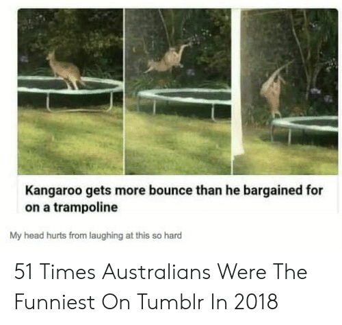 kangaroo: Kangaroo gets more bounce than he bargained for  on a trampoline  My head hurts from laughing at this so hard 51 Times Australians Were The Funniest On Tumblr In 2018