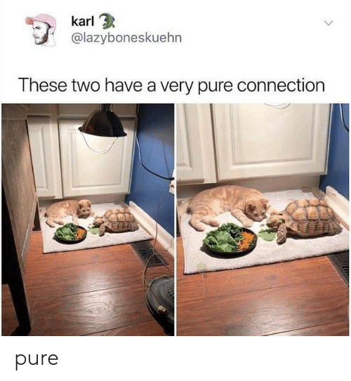 Pure,  Two, and Karl: karl  @lazyboneskuehn  These two have a very pure connection pure