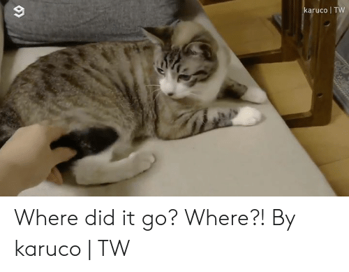 Dank, 🤖, and Did: karuco TW Where did it go? Where?!  By karuco | TW