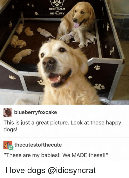 """Keep Calms: KEEP CALM  BE FLUFFY  blueberryfoxcake  This is just a great picture. Look at those happy  dogs!  thecutestofthecute  """"These are my babies!! We MADE these!!"""" I love dogs @idiosyncrat"""
