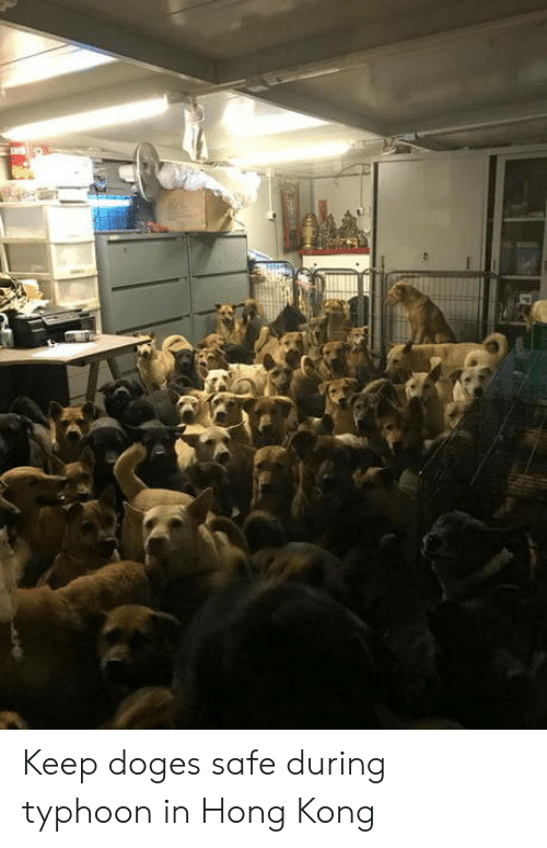 doges: Keep doges safe during typhoon in Hong Kong