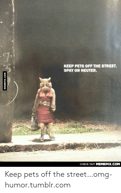 Spay: KEEP PETS OFF THE STREET,  SPAY OR NEUTER.  CHECK OUT MEMEPIX.COM  MEMEPIX.COM Keep pets off the street…omg-humor.tumblr.com