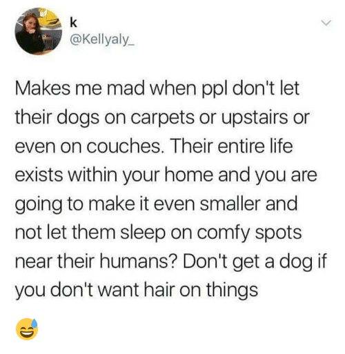 Dank, Dogs, and Life: @Kellyaly  Makes me mad when ppl don't let  their dogs on carpets or upstairs or  even on couches. Their entire life  exists within your home and you are  going to make it even smaller and  not let them sleep on comfy spots  near their humans? Don't get a dog if  you don't want hair on things 😅