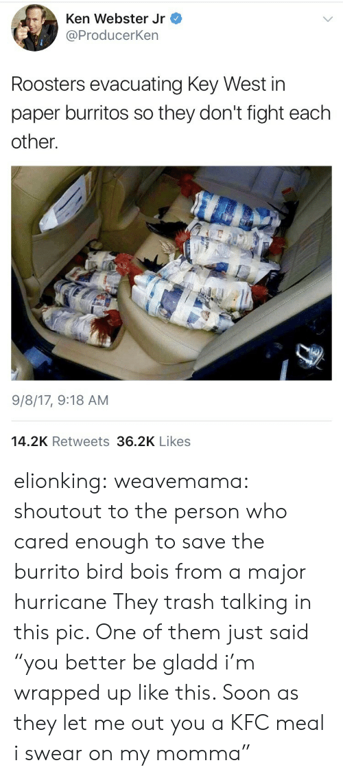 "let me out: Ken Webster Jr  @ProducerKen  Roosters evacuating Key West in  paper burritos so they don't fight each  other.  9/8/17, 9:18 AM  14.2K Retweets 36.2K Likes elionking: weavemama: shoutout to the person who cared enough to save the burrito bird bois from a major hurricane  They trash talking in this pic. One of them just said ""you better be gladd i'm wrapped up like this. Soon as they let me out you a KFC meal i swear on my momma"""