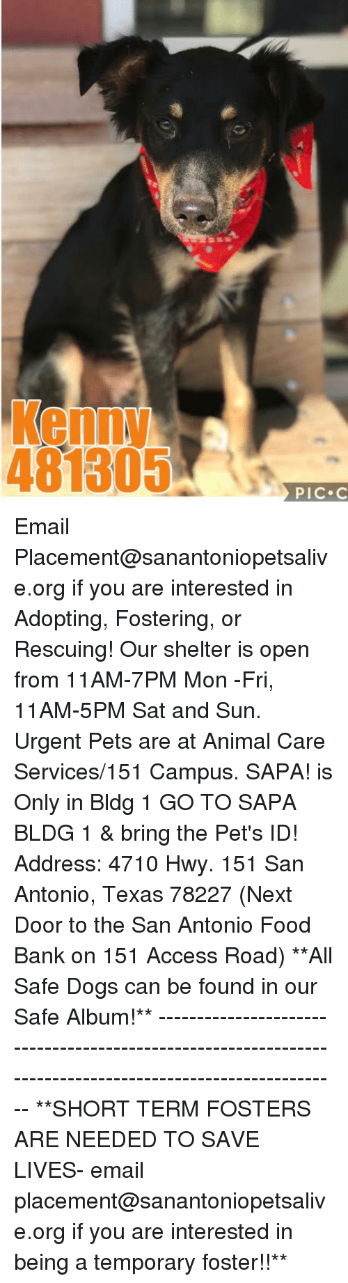 Dogs, Food, and Memes: Kenny  481305  PIC C Email Placement@sanantoniopetsalive.org if you are interested in Adopting, Fostering, or Rescuing!  Our shelter is open from 11AM-7PM Mon -Fri, 11AM-5PM Sat and Sun.  Urgent Pets are at Animal Care Services/151 Campus. SAPA! is Only in Bldg 1 GO TO SAPA BLDG 1 & bring the Pet's ID! Address: 4710 Hwy. 151 San Antonio, Texas 78227 (Next Door to the San Antonio Food Bank on 151 Access Road)  **All Safe Dogs can be found in our Safe Album!** ---------------------------------------------------------------------------------------------------------- **SHORT TERM FOSTERS ARE NEEDED TO SAVE LIVES- email placement@sanantoniopetsalive.org if you are interested in being a temporary foster!!**