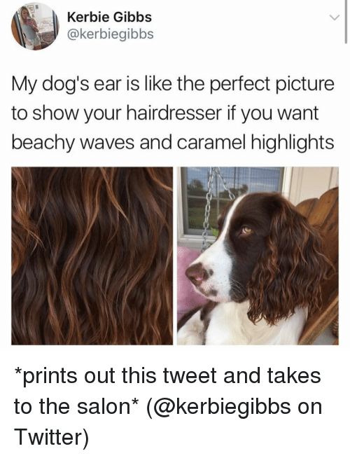 Dogs, Memes, and Twitter: Kerbie Gibbs  @kerbiegibbs  My dog's ear is like the perfect picture  to show your hairdresser if you want  beachy waves and caramel highlights *prints out this tweet and takes to the salon* (@kerbiegibbs on Twitter)