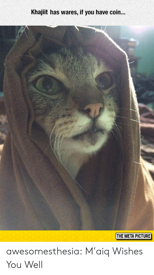 Tumblr, Blog, and Com: Khajiit has wares, if you have coin...  THE META PICTURE awesomesthesia:  M'aiq Wishes You Well