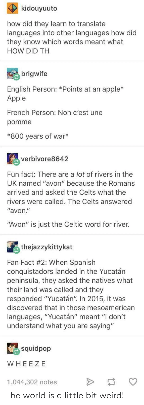 "Apple, Avon, and Celtic: kidouyuuto  how did they learn to translate  languages into other languages how did  they know which words meant what  HOW DID TH  brigwife  English Person: *Points at an apple*  Apple  French Person: Non c'est une  pomme  *800 years of war*  verbivore8642  Fun fact: There are a lot of rivers in thee  UK named ""avon"" because the Romans  arrived and asked the Celts what the  rivers were called. The Celts answered  ""avon  ""Avon"" is just the Celtic word for river.  thejazzykittykat  Fan Fact #2: When Spanish  conquistadors landed in the Yucatán  peninsula, they asked the natives what  their land was called and they  responded ""Yucatán"" In 2015, it was  discovered that in those mesoamerican  languages, ""Yucatán"" meant ""I don't  understand what you are saying""  squidpop  WHEE ZE  1,044,302 notes The world is a little bit weird!"