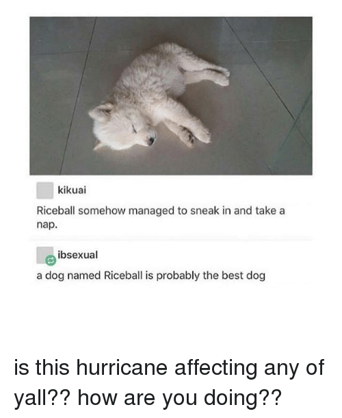 bests: kikuai  Riceball somehow managed to sneak in and take a  nap.  ibsexual  a dog named Riceball is probably the best dog is this hurricane affecting any of yall?? how are you doing??