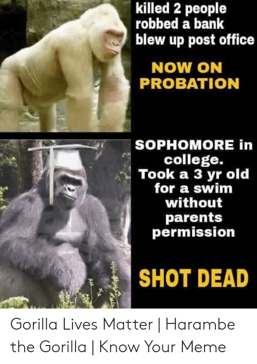 Gorilla Meme: killed 2 people  robbed a bank  blew up post office  NOW ON  PROBATION  SOPHOMORE in  college.  Took a 3 yr old  for a swim  without  parents  permission  SHOT DEAD Gorilla Lives Matter | Harambe the Gorilla | Know Your Meme