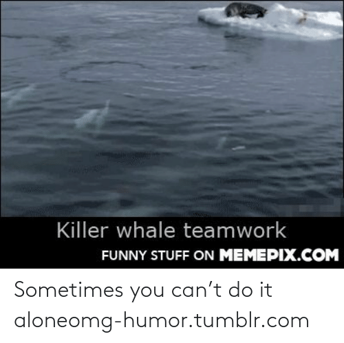 killer whale: Killer whale teamwork  FUNNY STUFF ON MEMEPIX.COM Sometimes you can't do it aloneomg-humor.tumblr.com
