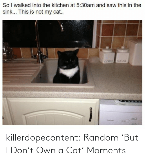 But I: killerdopecontent:  Random 'But I Don't Own a Cat' Moments