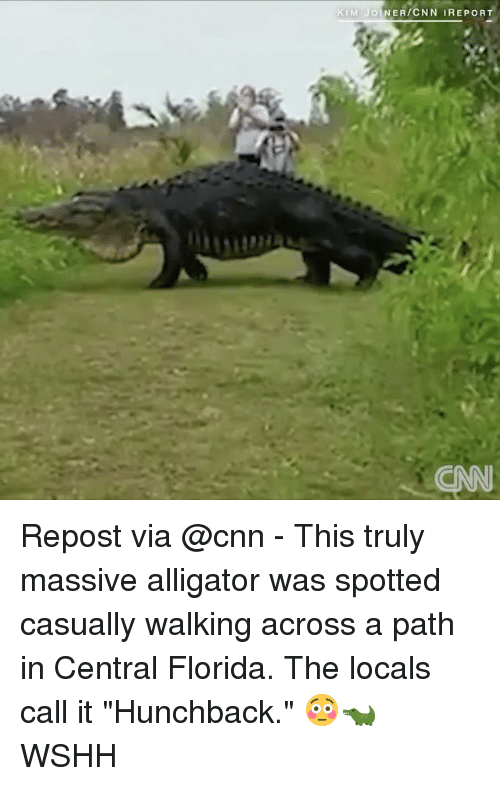 """hunchback: KIM JOINER/CNN IREPORT Repost via @cnn - This truly massive alligator was spotted casually walking across a path in Central Florida. The locals call it """"Hunchback."""" 😳🐊 WSHH"""
