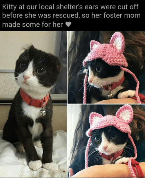Memes, Mom, and 🤖: Kitty at our local shelter's ears were cut off  before she was rescued, so her foster mom  made some for her