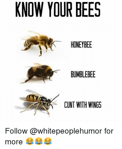bumblebee: KNOW YOUR BEES  HONEYBEE  BUMBLEBEE  CUNT WITH WINGS Follow @whitepeoplehumor for more 😂😂😂