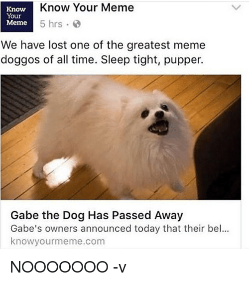 You tube porn dogs