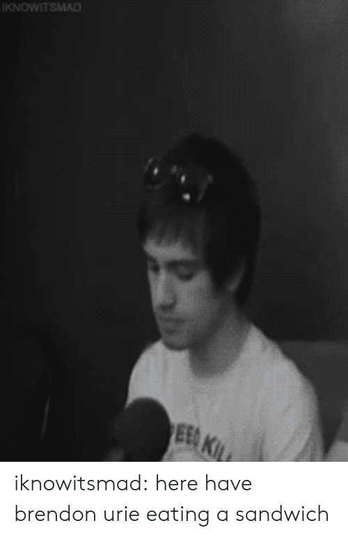 Tumblr, Blog, and Brendon Urie: KNOWITSMAD  EED KIL iknowitsmad:  here have brendon urie eating a sandwich