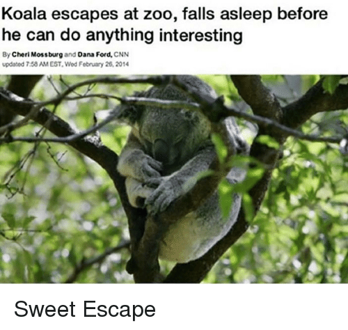 cnn.com, Ford, and Zoo: Koala escapes at zoo, falls asleep before  he can do anything interesting  By Cheri Mossburg and Dana Ford, CNN  updated 7:58 AM EST. Wed February 26,2014 <p>Sweet Escape</p>