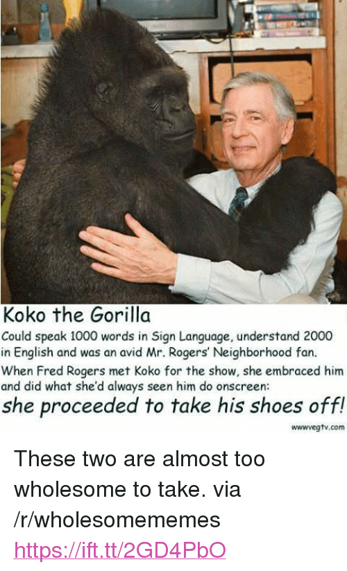 """Shoes, Sign Language, and English: Koko the Gorilla  Could speak 1000 words in Sign Language, understand 2000  in English and was an avid Mr. Rogers' Neighborhood fan.  When Fred Rogers met Koko for the show, she embraced him  and did what she'd always seen him do onscreen  she proceeded to take his shoes off!  wwwvegtv.com <p>These two are almost too wholesome to take. via /r/wholesomememes <a href=""""https://ift.tt/2GD4PbO"""">https://ift.tt/2GD4PbO</a></p>"""