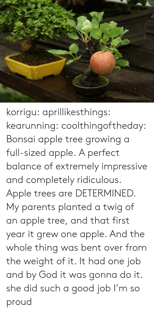 Apple, God, and Parents: korrigu:  aprillikesthings:  kearunning:  coolthingoftheday:    Bonsai apple tree growing a full-sized apple.   A perfect balance of extremely impressive and completely ridiculous.   Apple trees are DETERMINED. My parents planted a twig of an apple tree, and that first year it grew one apple. And the whole thing was bent over from the weight of it. It had one job and by God it was gonna do it.   she did such a good job I'm so proud