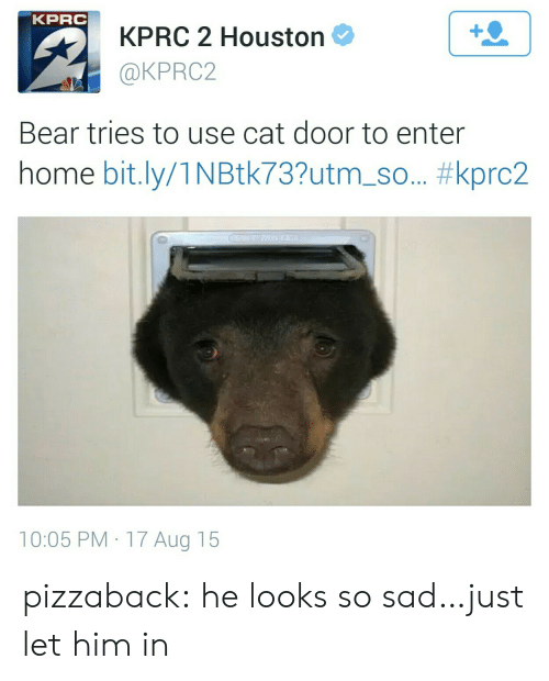 bit.ly: KPRC  KPRC 2 Houston  @KPRC2  1  Bear tries to use cat door to enter  home bit.ly/1 N Btk73?utm-so.. #kprc2  10:05 PM 17 Aug 15 pizzaback:  he looks so sad…just let him in