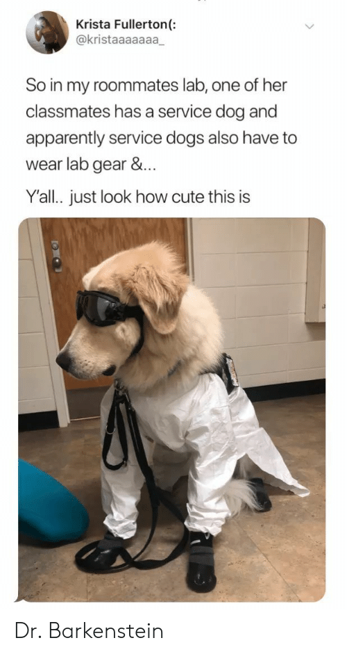 Apparently, Cute, and Dogs: Krista Fullerton(:  @kristaaaaaaa  So in my roommates lab, one of her  classmates has a service dog and  apparently service dogs also have to  wear lab gear &...  Y'all. just look how cute this is Dr. Barkenstein