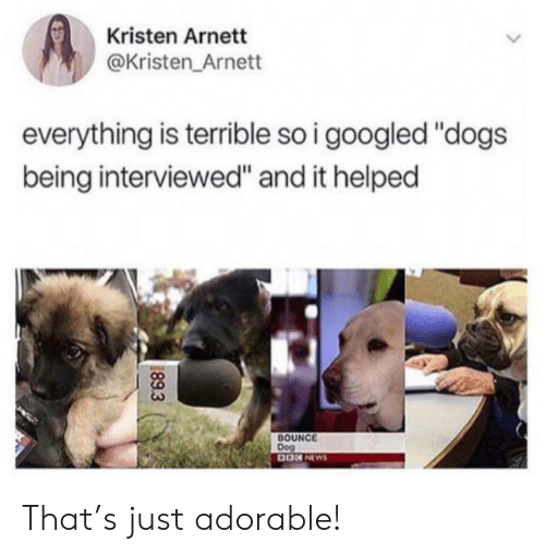 "Dogs, News, and Adorable: Kristen Arnett  @Kristen Arnett  everything is terrible so i googled ""dogs  being interviewed"" and it helped  BOUNCE  Dog  0ON NEWS  89.3 That's just adorable!"