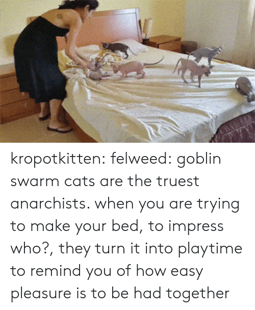 Playtime: kropotkitten: felweed: goblin swarm cats are the truest anarchists. when you are trying to make your bed, to impress who?, they turn it into playtime to remind you of how easy pleasure is to be had together