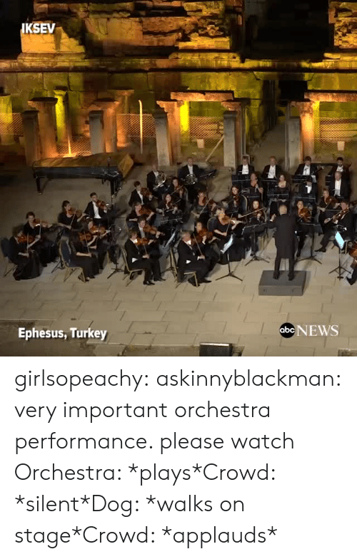 Staging: KSEV  Ephesus, Turkey  abe NEWS girlsopeachy:  askinnyblackman:  very important orchestra performance. please watch  Orchestra: *plays*Crowd: *silent*Dog: *walks on stage*Crowd: *applauds*