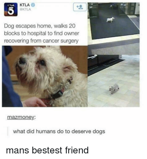 Dogs, Cancer, and Home: KTLA  KTLA  KTLA  Dog escapes home, walks 20  blocks to hospital to find owner  recovering from cancer surgery  mazmoney:  what did humans do to deserve dogs mans bestest friend