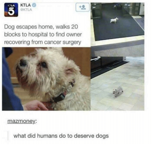 Dogs, Cancer, and Home: KTLA  KTLA  KTLA  Dog escapes home, walks 20  blocks to hospital to find owner  recovering from cancer surgery  mazmoney:  what did humans do to deserve dogs