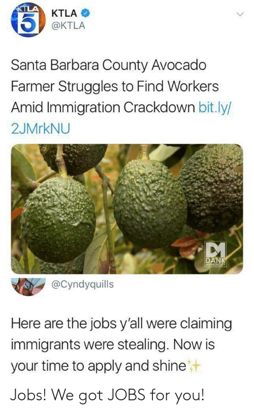Dank, Avocado, and Immigration: KTLA  KTLA  @KTLA  Santa Barbara County Avocado  Farmer Struggles to Find Workers  Amid Immigration Crackdown bit.ly/  2JMRKNU  DANK  MEMEOLOGY  @Cyndyquills  Here are the jobs y'all were claiming  immigrants were stealing. Now is  your time to apply and shine Jobs! We got JOBS for you!