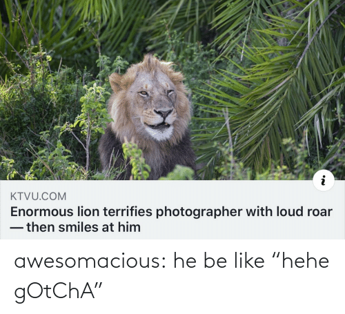 "enormous: KTVU.COM  Enormous lion terrifies photographer with loud roar  -then smiles at him awesomacious:  he be like ""hehe gOtChA"""