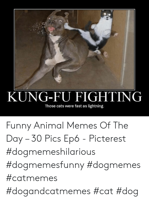funny animal memes: KUNG-FU FIGHTING  Those cats were fast as lightning. Funny Animal Memes Of The Day – 30 Pics Ep6 - Picterest #dogmemeshilarious #dogmemesfunny #dogmemes #catmemes #dogandcatmemes #cat #dog