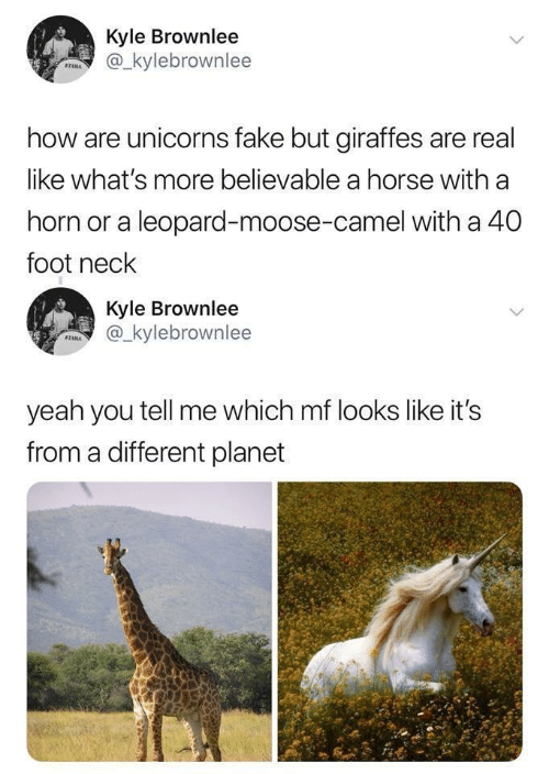 foot: Kyle Brownlee  @_kylebrownlee  STAMA  how are unicorns fake but giraffes are real  like what's more believable a horse with a  horn or a leopard-moose-camel with a 40  foot neck  Kyle Brownlee  @_kylebrownlee  SZAMA  yeah you tell me which mf looks like it's  from a different planet