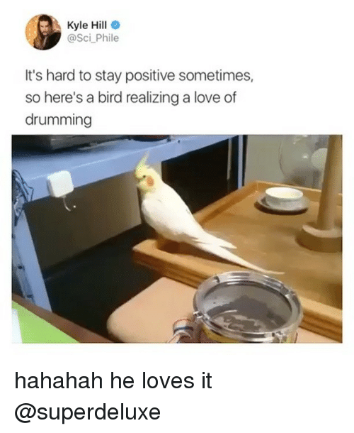 drumming: Kyle Hill  @Sci Phile  It's hard to stay positive sometimes,  so here's a bird realizing a love of  drumming hahahah he loves it @superdeluxe