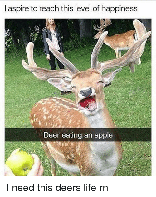 aspirated: l aspire to reach this level of happiness  Deer eating an apple I need this deers life rn