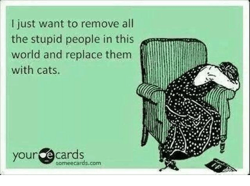 Cats, Grumpy Cat, and Ecards: l just want to remove all  the stupid people in this  world and replace them  with cats.  your  cards  some ecards, com