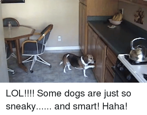 Sneakiness: l) LOL!!!! Some dogs are just so sneaky...... and smart! Haha!