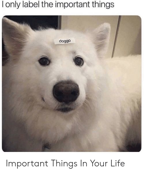 important things: l only label the important things  doggo Important Things In Your Life