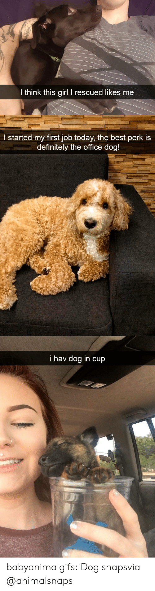 Likes Me: l think this girl I rescued likes me   l started my first job today, the best perk is  definitely the office doa   i hav dog in cup babyanimalgifs:  Dog snapsvia @animalsnaps​