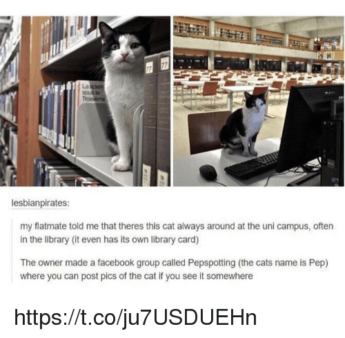 If You See It: La  lesbianpirates:  my flatmate told me that theres this cat always around at the uni campus, often  in the library (it even has its own library card)  The owner made a facebook group called Pepspotting (the cats name is Pep)  where you can post pics of the cat if you see it somewhere https://t.co/ju7USDUEHn
