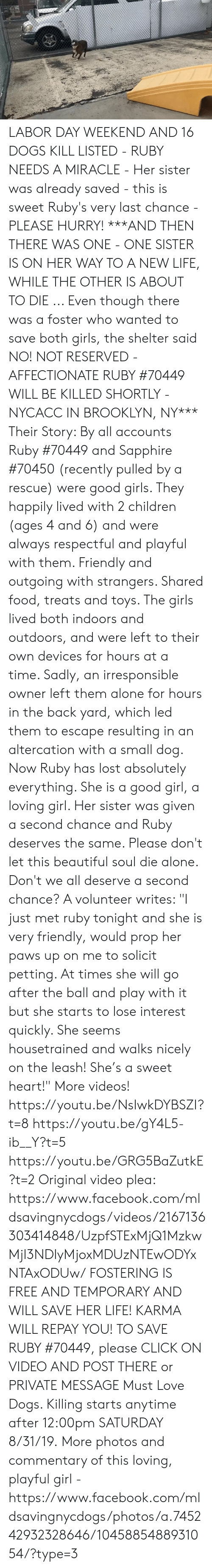 """Being Alone, Beautiful, and Children: LABOR DAY WEEKEND AND 16 DOGS KILL LISTED - RUBY NEEDS A MIRACLE - Her sister was already saved - this is sweet Ruby's very last chance - PLEASE HURRY!  ***AND THEN THERE WAS ONE - ONE SISTER IS ON HER WAY TO A NEW LIFE, WHILE THE OTHER IS ABOUT TO DIE ... Even though there was a foster who wanted to save both girls, the shelter said NO! NOT RESERVED - AFFECTIONATE RUBY #70449 WILL BE KILLED SHORTLY - NYCACC IN BROOKLYN, NY***   Their Story: By all accounts Ruby #70449 and Sapphire #70450 (recently pulled by a rescue) were good girls. They happily lived with 2 children (ages 4 and 6) and were always respectful and playful with them. Friendly and outgoing with strangers. Shared food, treats and toys. The girls lived both indoors and outdoors, and were left to their own devices for hours at a time. Sadly, an irresponsible owner left them alone for hours in the back yard, which led them to escape resulting in an altercation with a small dog. Now Ruby has lost absolutely everything. She is a good girl, a loving girl. Her sister was given a second chance and Ruby deserves the same. Please don't let this beautiful soul die alone. Don't we all deserve a second chance?   A volunteer writes: """"I just met ruby tonight and she is very friendly, would prop her paws up on me to solicit petting. At times she will go after the ball and play with it but she starts to lose interest quickly. She seems housetrained and walks nicely on the leash! She's a sweet heart!""""  More videos! https://youtu.be/NsIwkDYBSZI?t=8 https://youtu.be/gY4L5-ib__Y?t=5  https://youtu.be/GRG5BaZutkE?t=2  Original video plea: https://www.facebook.com/mldsavingnycdogs/videos/2167136303414848/UzpfSTExMjQ1MzkwMjI3NDIyMjoxMDUzNTEwODYxNTAxODUw/  FOSTERING IS FREE AND TEMPORARY AND WILL SAVE HER LIFE! KARMA WILL REPAY YOU!  TO SAVE RUBY #70449, please CLICK ON VIDEO AND POST THERE or PRIVATE MESSAGE Must Love Dogs.   Killing starts anytime after 12:00pm SATURDAY 8/31/19.  More ph"""