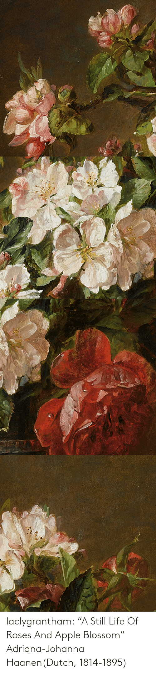 "Paintings: laclygrantham:  ""A Still Life Of Roses And Apple Blossom"" Adriana-Johanna Haanen(Dutch, 1814-1895)"